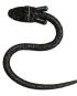 Sidetrac Cobra
